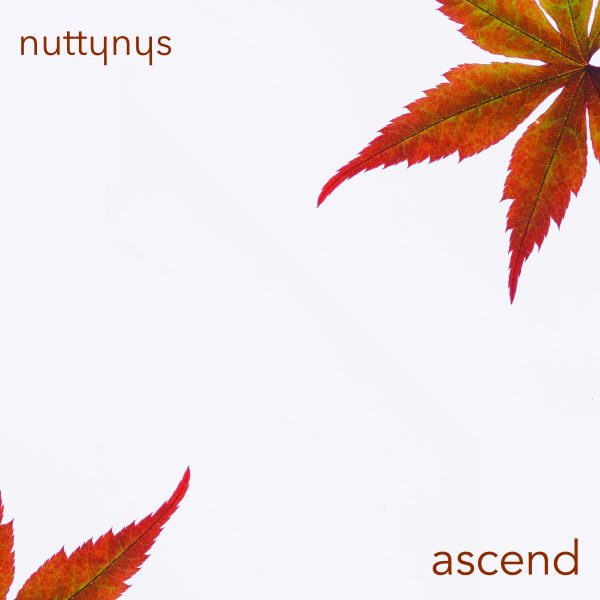 Artwork for Nutty Nys - Ascend